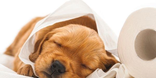 vermi intestinale cane