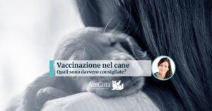 vaccinazione del cane quali fare