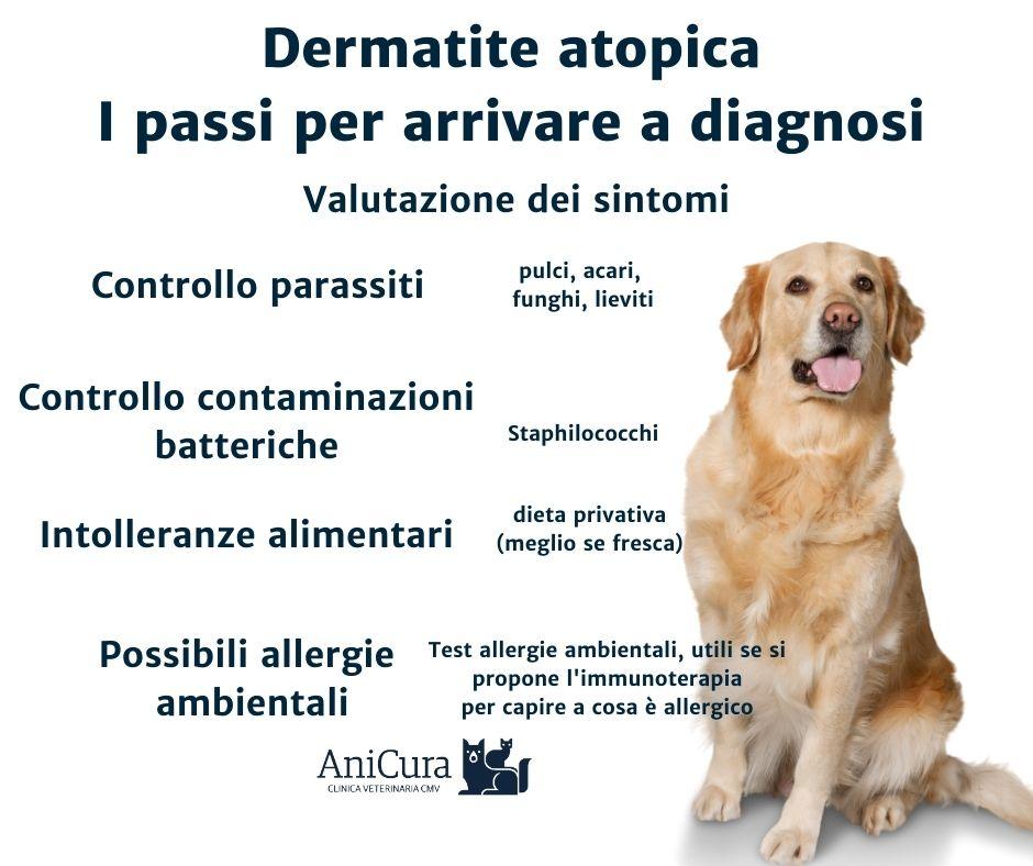 diagnosi prurito e dermatite nel cane