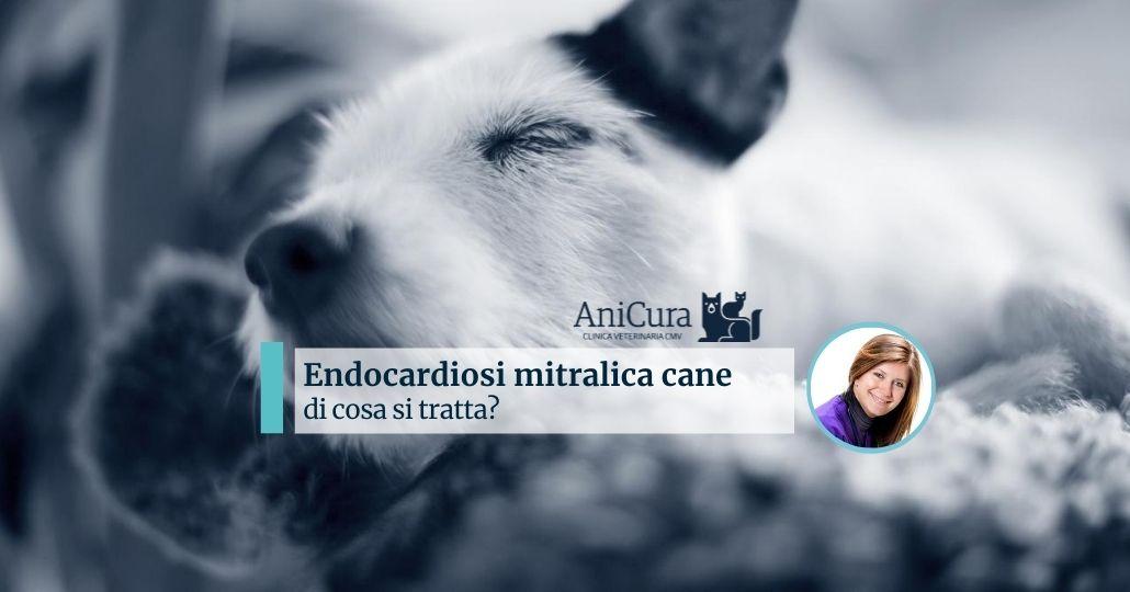 endocardiosi mitralica nel cane