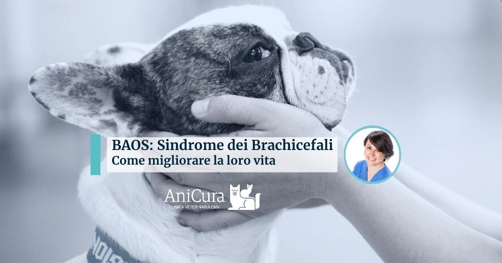 Sindrome dei cani brachicefali BAOS