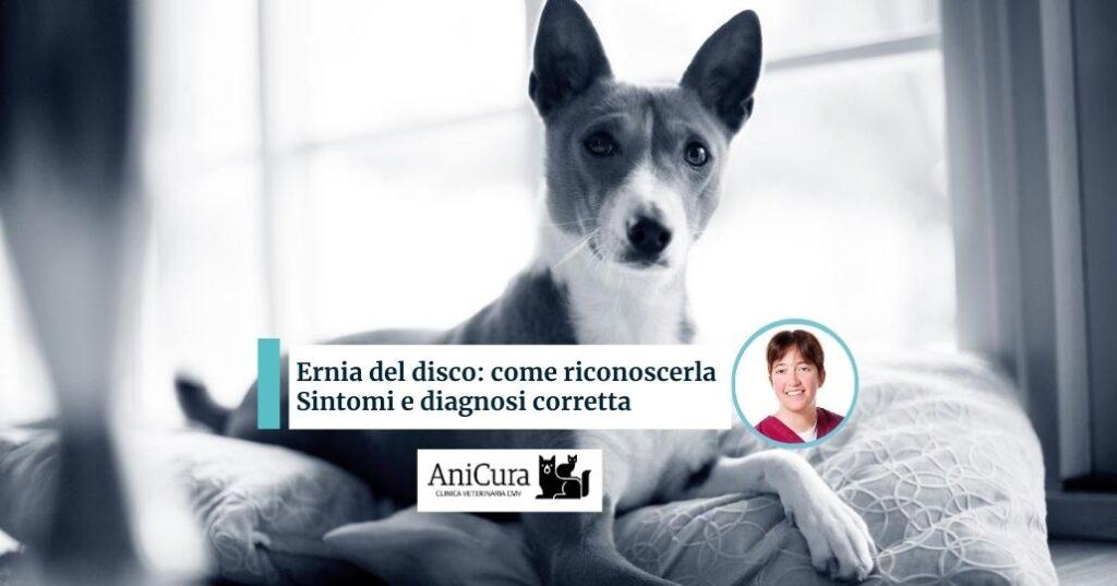 Ernia del disco nel cane