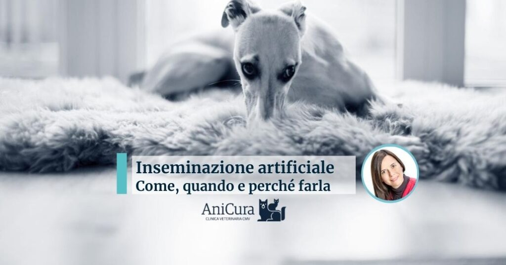 inseminazione artificiale cane