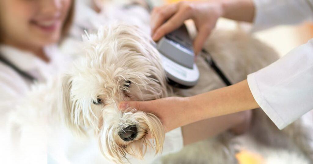 lettore microchip cane