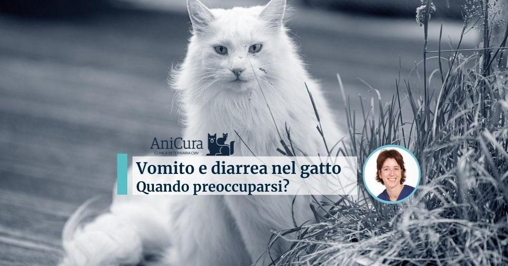 vomito e diarrea gatto