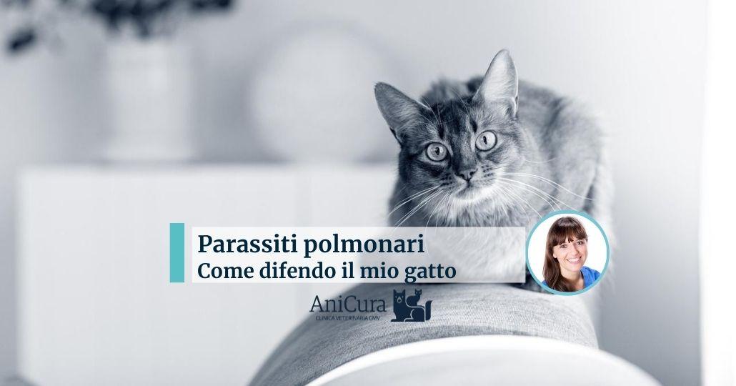 Parassiti polmonari gatto come difenderlo