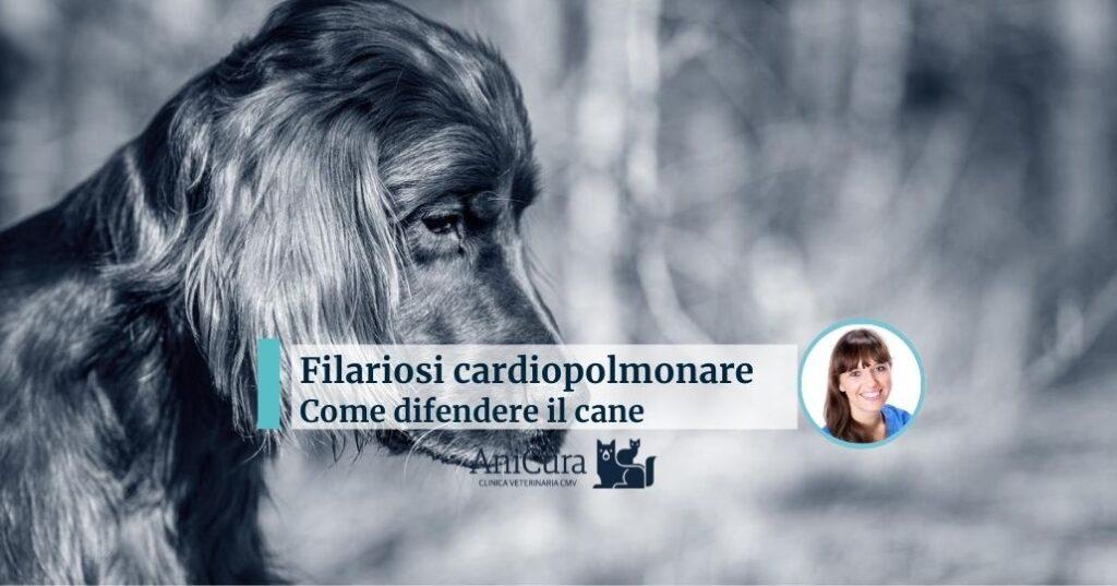 filariosi cardiopolmonare cane