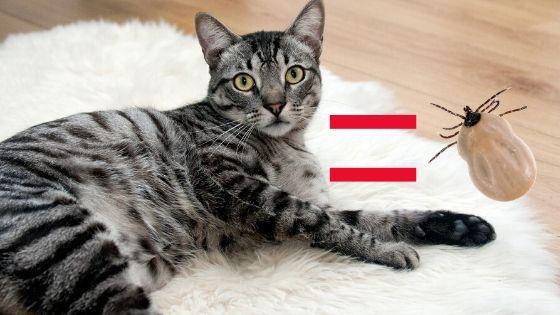 gatto come un parassita sensibilità alla permetrina