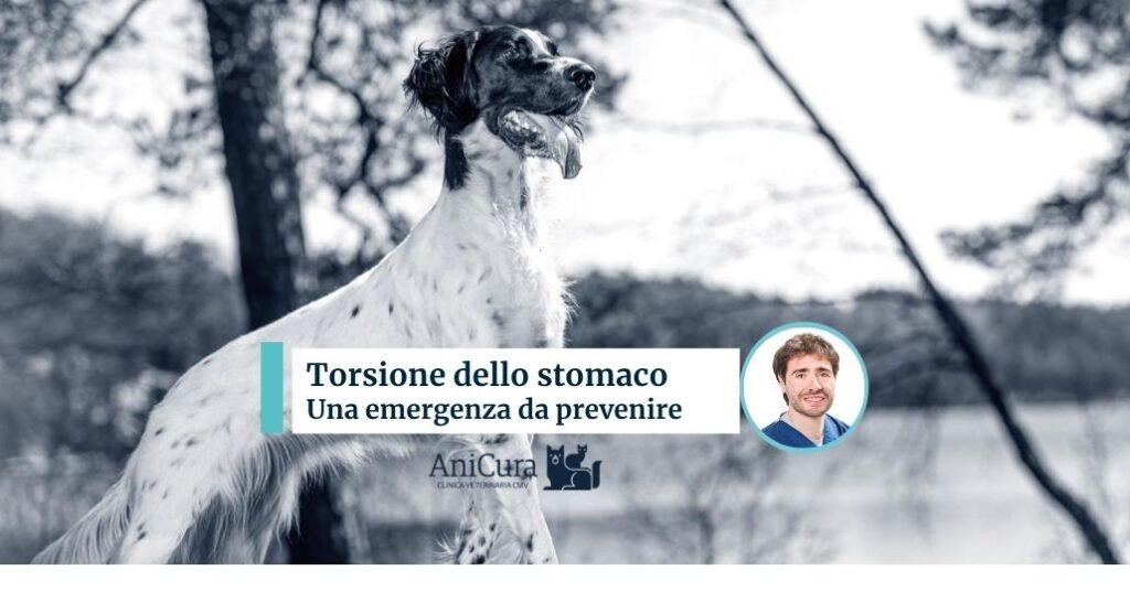 Torsione dello stomaco nel cane