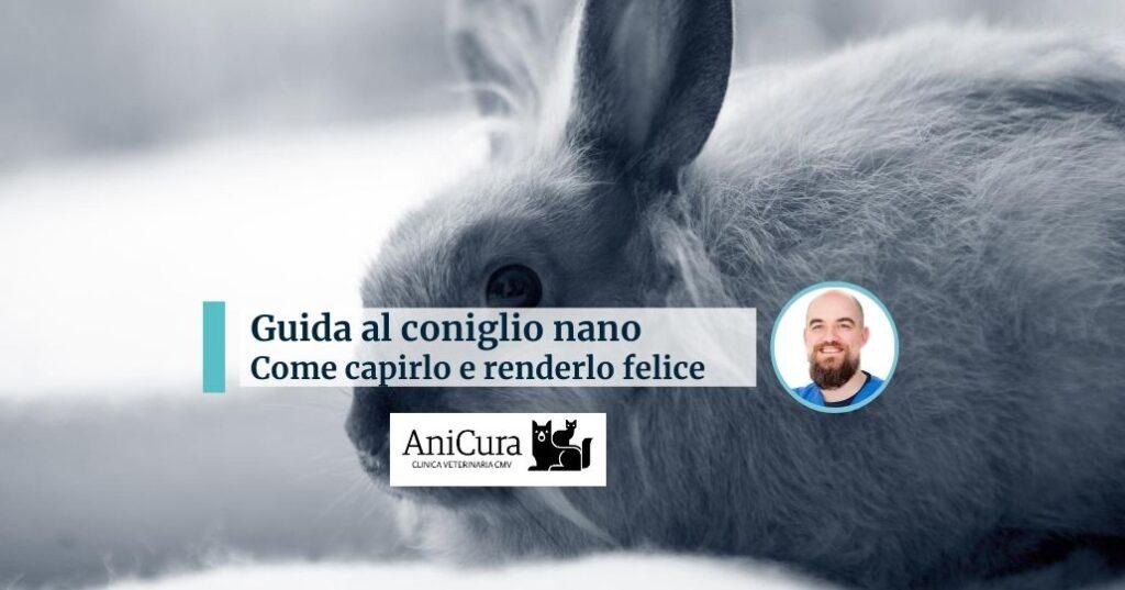 Coniglio-guida-alla-comprensione