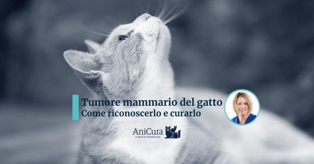 tumore mammario del gatto