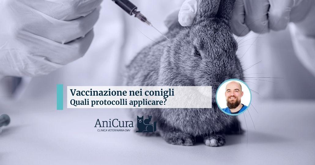Vaccinazione nei conigli