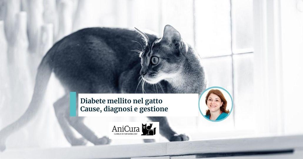 diabete mellito nel gatto