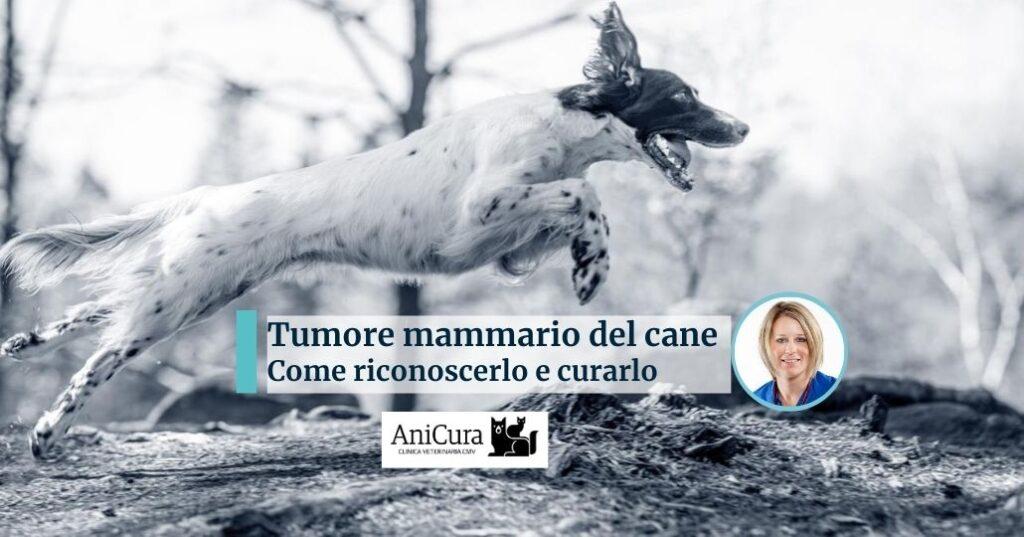 tumore mammario del cane