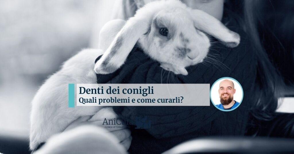 denti dei conigli quali problemi