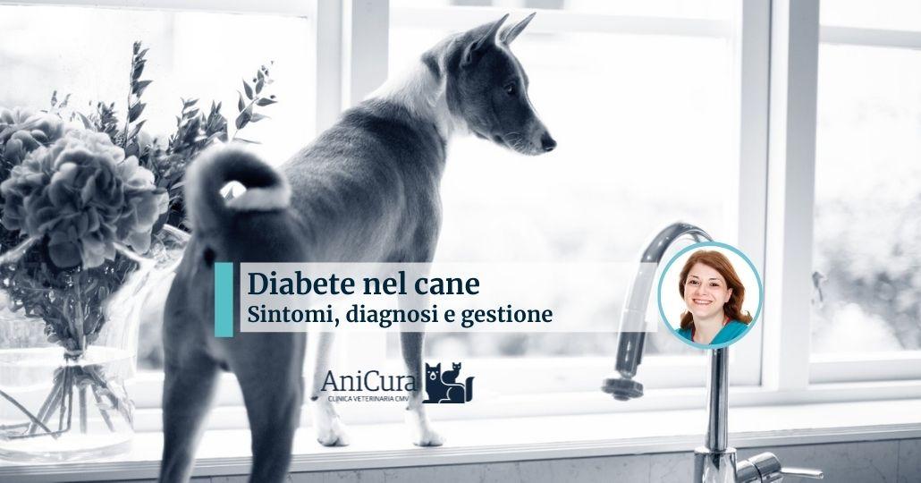 diabete nel cane proprietario